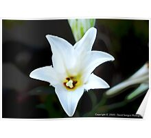 White Spring Flower Poster