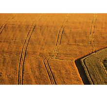 Barley field Photographic Print