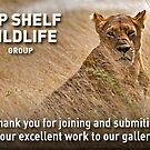 Top Shelf Wildlife welcome banner  by Konstantinos Arvanitopoulos