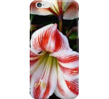 LILIES FOREVER - GORGEOUS WHITE-AND-RED-STRIPED BEAUTIES iPhone Case/Skin