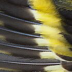 Siskin Wing by kernuak