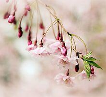 Budding Blossom by Jessica Jenney