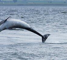 Dolphin Leap by kernuak