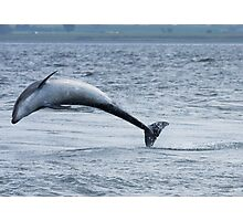 Dolphin Leap Photographic Print