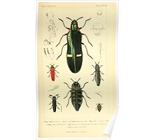 The Animal Kingdom by Georges Cuvier, PA Latreille, and Henry McMurtrie 1834  432 - Insecta Insects Poster