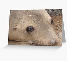 Galapagos Sealion Greeting Card
