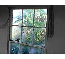 Buzz the dull flies, on the cobwebbed window. Photographic Print
