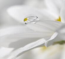 ~Flowers leave a part of their fragrance in the hands that bestow them~ by Janitka