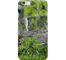 Great Blue Heron Turning Her Eggs in the Nest iPhone Case/Skin