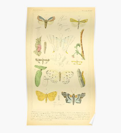 The Animal Kingdom by Georges Cuvier, PA Latreille, and Henry McMurtrie 1834  520 - Insecta Insects Poster