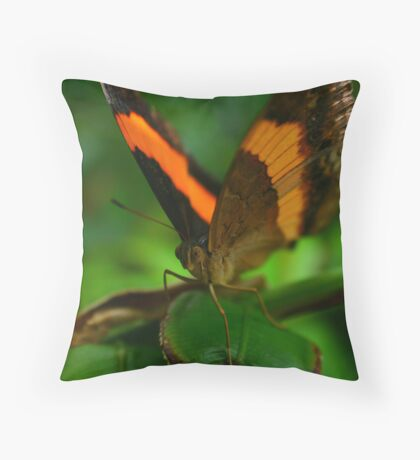 Orange and Brown Throw Pillow