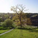 Seacroft tree view 3 by atombat
