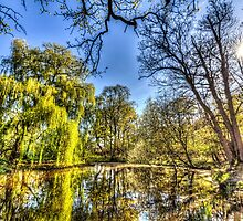 The Pond Side Trees by DavidHornchurch