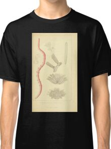 The Animal Kingdom by Georges Cuvier, PA Latreille, and Henry McMurtrie 1834  292 - Annelides Large Invertebrates or Worms Classic T-Shirt