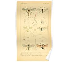 The Animal Kingdom by Georges Cuvier, PA Latreille, and Henry McMurtrie 1834  522 - Insecta Insects Poster