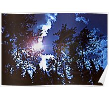 Sunburst thru Silhouetted Trees Poster