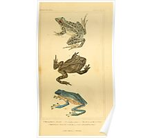 The Animal Kingdom by Georges Cuvier, PA Latreille, and Henry McMurtrie 1834  039 - Reptilia Reptiles Poster