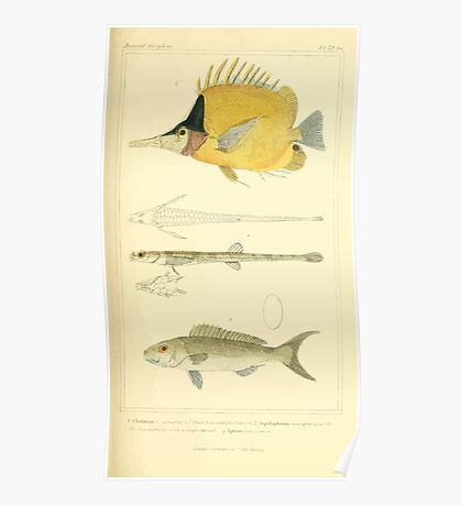 The Animal Kingdom by Georges Cuvier, PA Latreille, and Henry McMurtrie 1834  123 - Pisces Fish Poster
