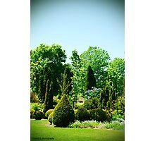 Gorgeous Gardens Photographic Print