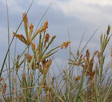 Dune Grass by Renae Walton