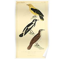 The Animal Kingdom by Georges Cuvier, PA Latreille, and Henry McMurtrie 1834 666 - Aves Avians Birds Poster
