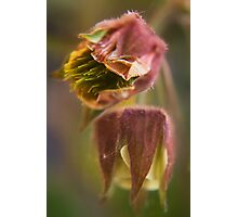Claret (from wild flowers collection) Photographic Print
