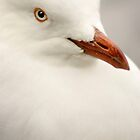 Seagull Stare by Kellea Croft
