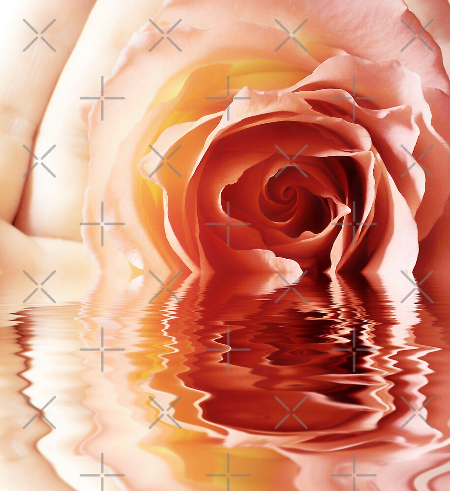 Rose, hands and water by Olga Altunina