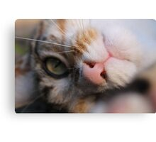 Playful Kitty Canvas Print