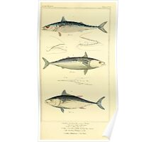 The Animal Kingdom by Georges Cuvier, PA Latreille, and Henry McMurtrie 1834  125 - Pisces Fish Poster