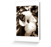Diffused Flower 4 Greeting Card