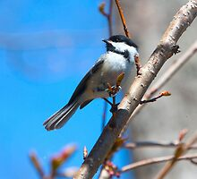 Little Chickadee by Jennifer Barrett