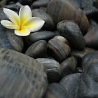 Frangipani black rocks 1 by Quinton Smith