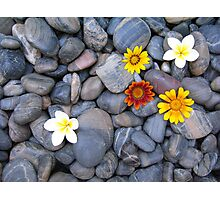 Flowers blackrock Photographic Print