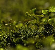 green life by kersta1