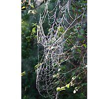 Dewed Cobweb Photographic Print
