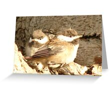 Baby Finches Greeting Card
