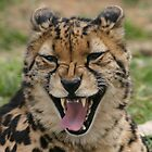 King Cheetah Chuckle by Samantha Bailey