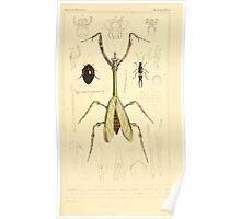 The Animal Kingdom by Georges Cuvier, PA Latreille, and Henry McMurtrie 1834  476 - Insecta Insects Poster