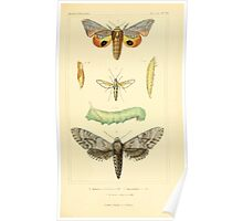 The Animal Kingdom by Georges Cuvier, PA Latreille, and Henry McMurtrie 1834  511 - Insecta Insects Poster