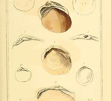 The Animal Kingdom by Georges Cuvier, PA Latreille, and Henry McMurtrie 1834  275 - Mollusca Mollusks by wetdryvac