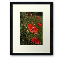 Poppies 1 Framed Print