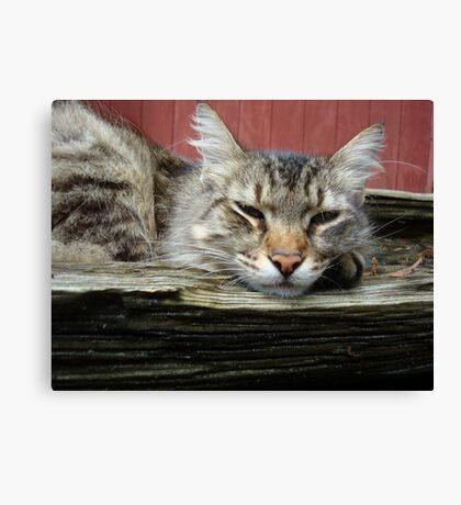 CAT IN THE CRADLE Canvas Print