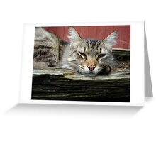 CAT IN THE CRADLE Greeting Card