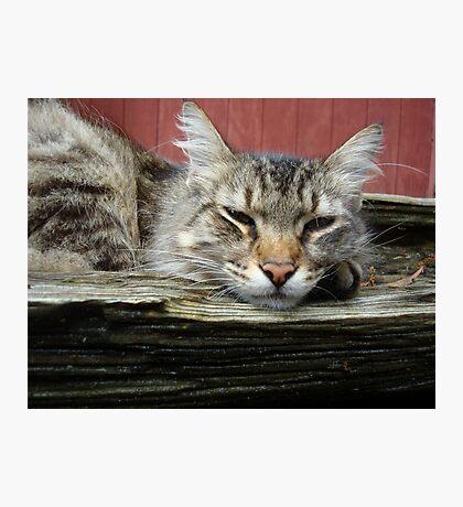 CAT IN THE CRADLE Photographic Print