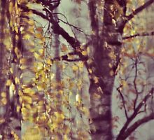 Abstract birches by LindaMarieAnson