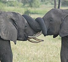 Trunk Wrestling, Tarangire National Park, Tanzania by Adrian Paul