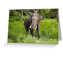 Young Borneo Elephant Greeting Card