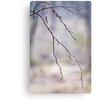 """Zen Branch"" Canvas Print"