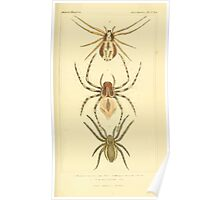The Animal Kingdom by Georges Cuvier, PA Latreille, and Henry McMurtrie 1834  374 - Arachnides Arachnids Poster